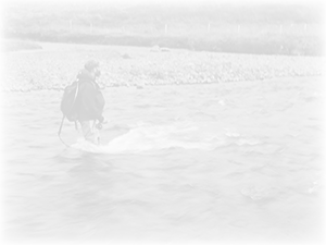 Akce na For-Fishing 2012